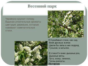 Весенний парк Черемуха кружит голову. Вдыхаю упоительные ароматы цветущих дер