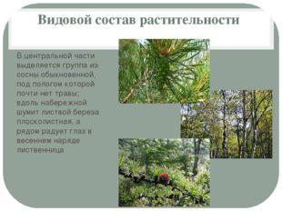 Видовой состав растительности В центральной части выделяется группа из сосны