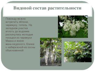 Видовой состав растительности Повсюду можно встретить яблони, черемуху, топол