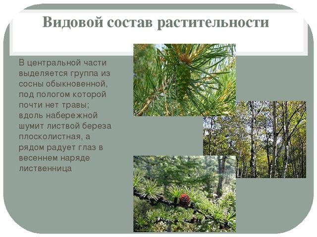 Видовой состав растительности В центральной части выделяется группа из сосны...