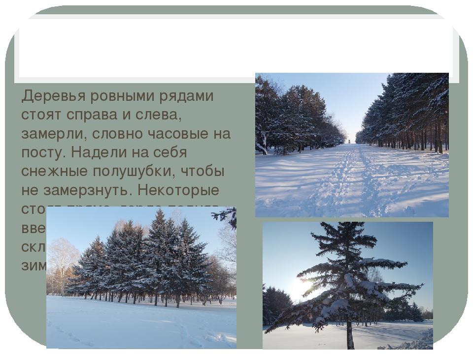 Деревья ровными рядами стоят справа и слева, замерли, словно часовые на пост...