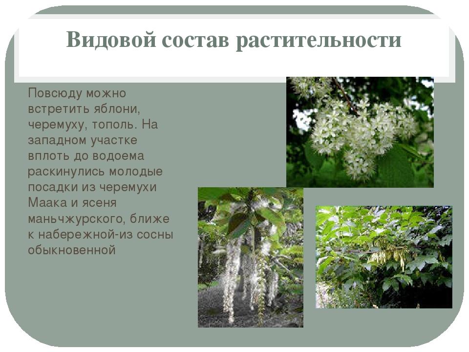 Видовой состав растительности Повсюду можно встретить яблони, черемуху, топол...