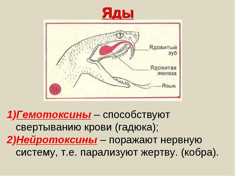 Яды Гемотоксины – способствуют свертыванию крови (гадюка); Нейротоксины – пор...