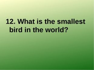 12. What is the smallest bird in the world?
