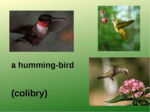 a humming-bird (colibrу)