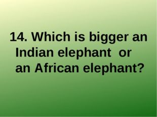 14. Which is bigger an Indian elephant or an African elephant?
