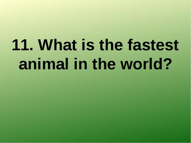 11. What is the fastest animal in the world?