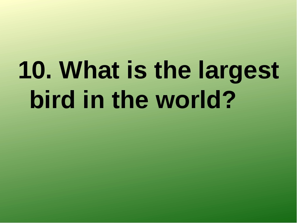 10. What is the largest bird in the world?