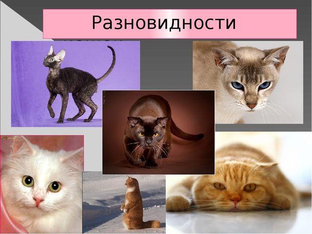 Разновидности кошек