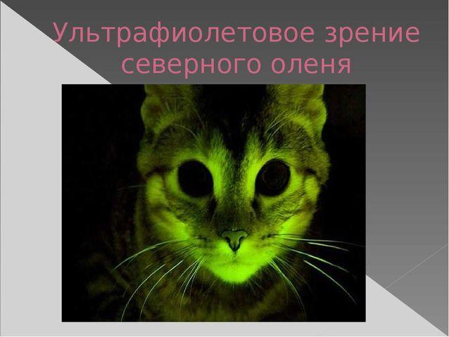 Ультрафиолетовое зрение северного оленя
