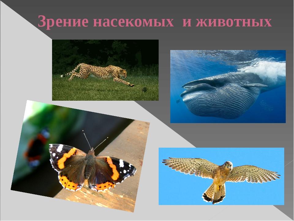 Зрение насекомых и животных