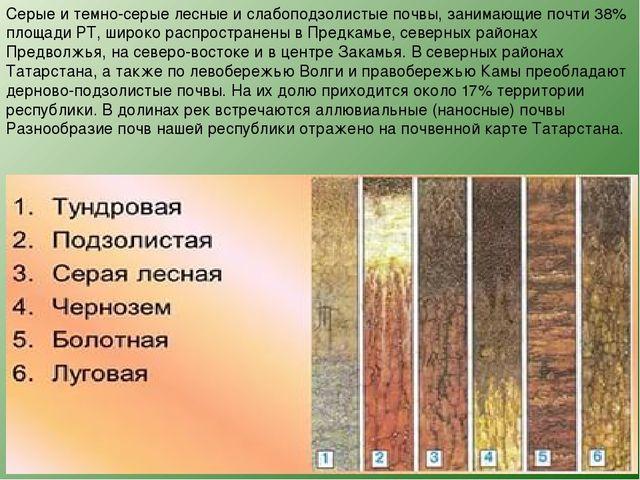 Серые и темно-серые лесные и слабоподзолистые почвы, занимающие почти 38% пло...