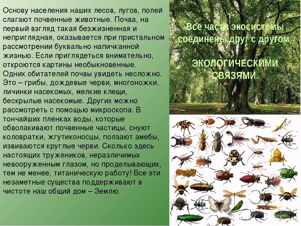 Основу населения наших лесов, лугов, полей слагают почвенные животные. Почва,...