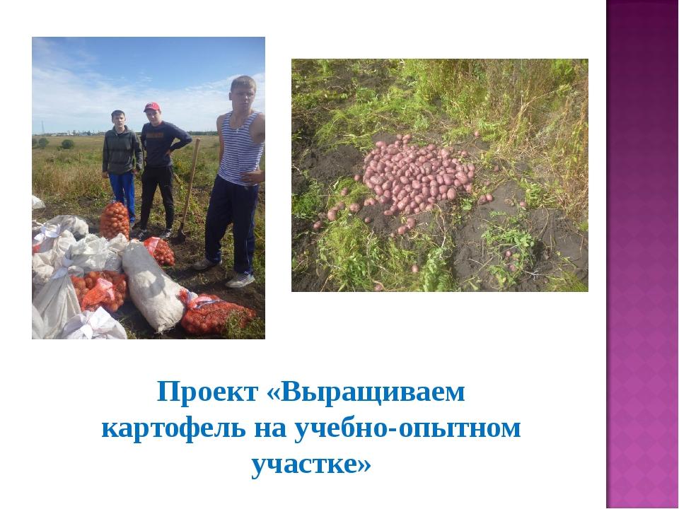 Проект «Выращиваем картофель на учебно-опытном участке»