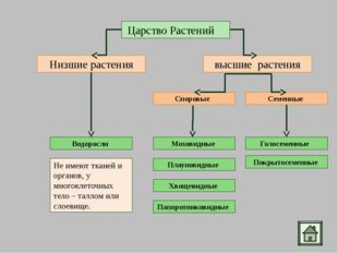 Ламинария - бурая водоросль (морская капуста) Порфира – красная водоросль Спи