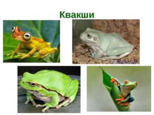 Квакши
