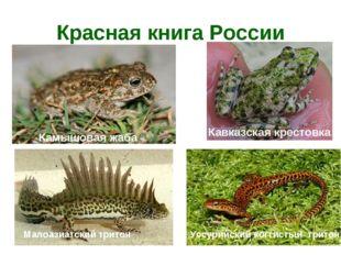 Красная книга России Камышовая жаба Кавказская крестовка Уссурийский когтисты