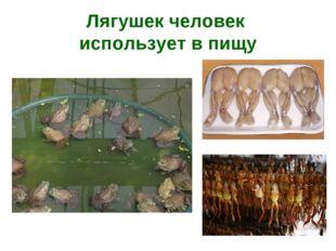 Лягушек человек использует в пищу