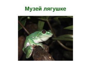 Музей лягушке