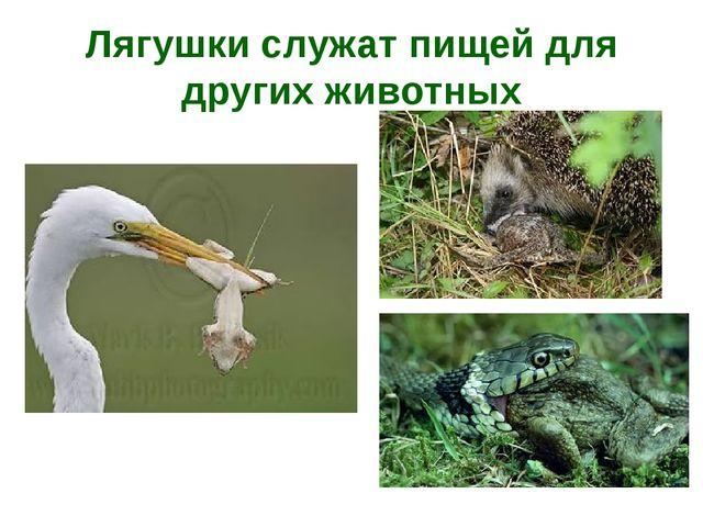 Лягушки служат пищей для других животных