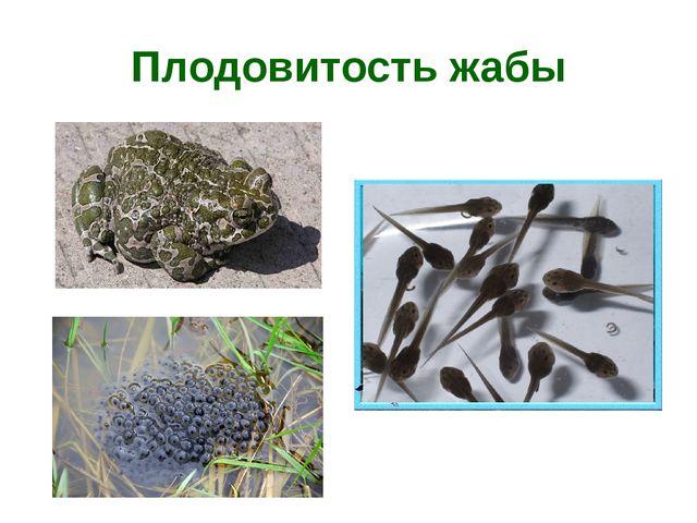 Плодовитость жабы