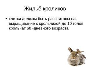 Жильё кроликов клетки должны быть рассчитаны на выращивание с крольчихой до 1