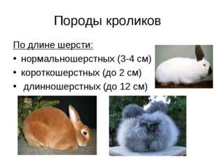 Породы кроликов По длине шерсти: нормальношерстных (3-4 см) короткошерстных (