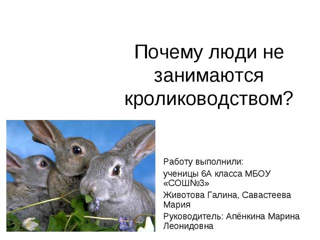 Почему люди не занимаются кролиководством? Работу выполнили: ученицы 6А класс...