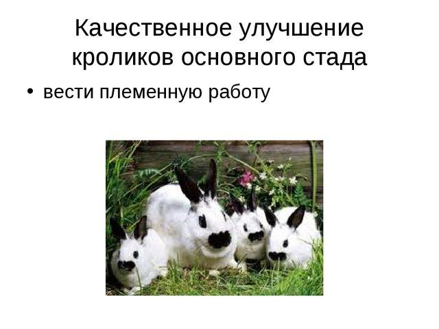 Качественное улучшение кроликов основного стада вести племенную работу
