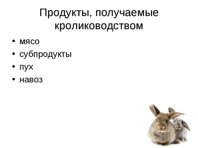 Продукты, получаемые кролиководством мясо субпродукты пух навоз