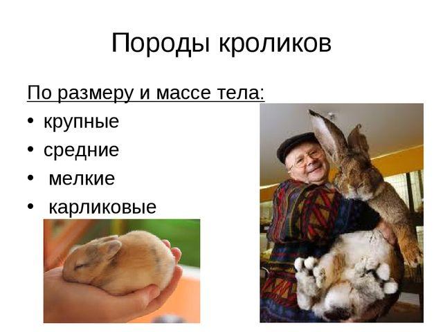 Породы кроликов По размеру и массе тела: крупные средние мелкие карликовые