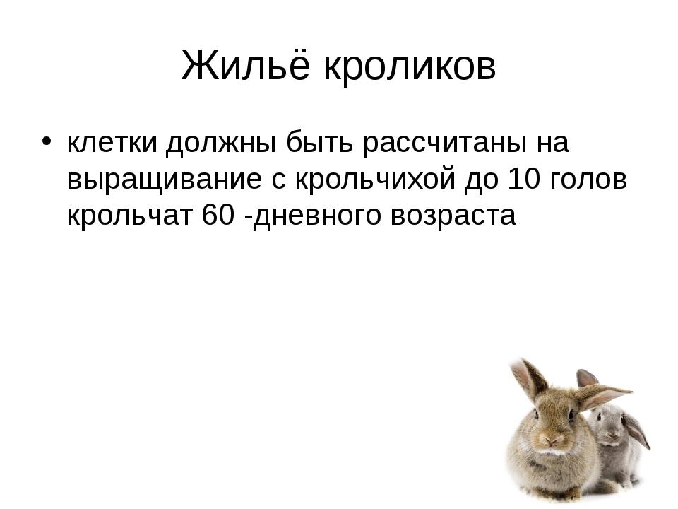 Жильё кроликов клетки должны быть рассчитаны на выращивание с крольчихой до 1...