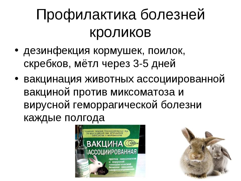 Профилактика болезней кроликов дезинфекция кормушек, поилок, скребков, мётл ч...