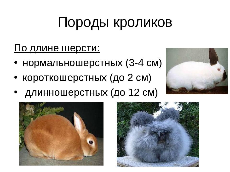 Породы кроликов По длине шерсти: нормальношерстных (3-4 см) короткошерстных (...
