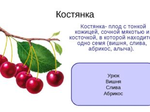 Костянка Костянка- плод с тонкой кожицей, сочной мякотью и косточкой, в котор