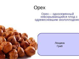 Орех Орех— односемянный невскрывающийся плод с одревесневшим околоплодником.