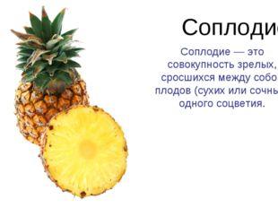 Соплодие Соплодие — это совокупность зрелых, сросшихся между собой плодов (су
