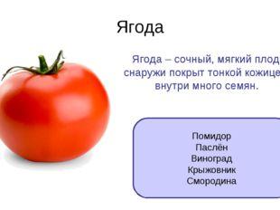 Ягода Ягода – сочный, мягкий плод, снаружи покрыт тонкой кожицей, внутри мног