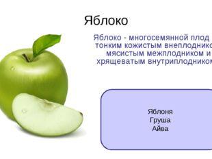 Яблоко Яблоко - многосемянной плод с тонким кожистым внеплодником, мясистым м