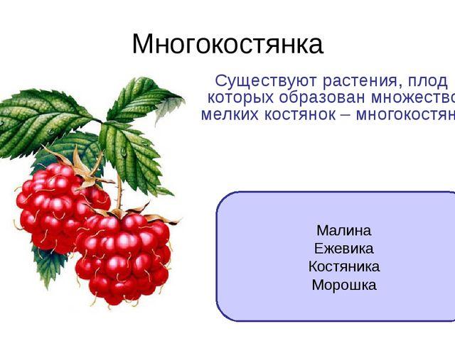 Многокостянка Существуют растения, плод которых образован множеством мелких к...