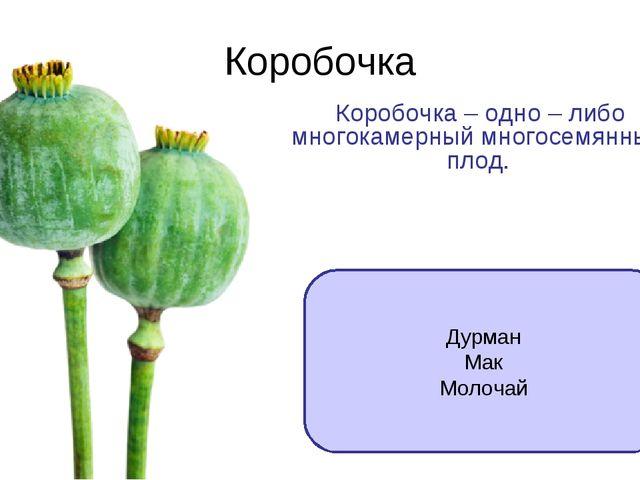 Коробочка Коробочка – одно – либо многокамерный многосемянный плод. Дурман Ма...