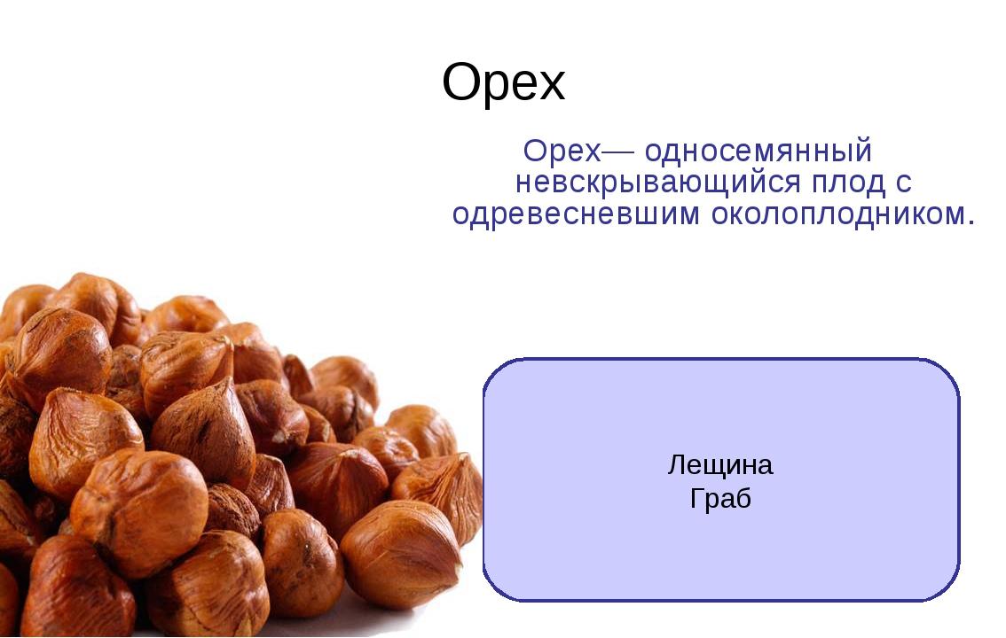 Орех Орех— односемянный невскрывающийся плод с одревесневшим околоплодником....