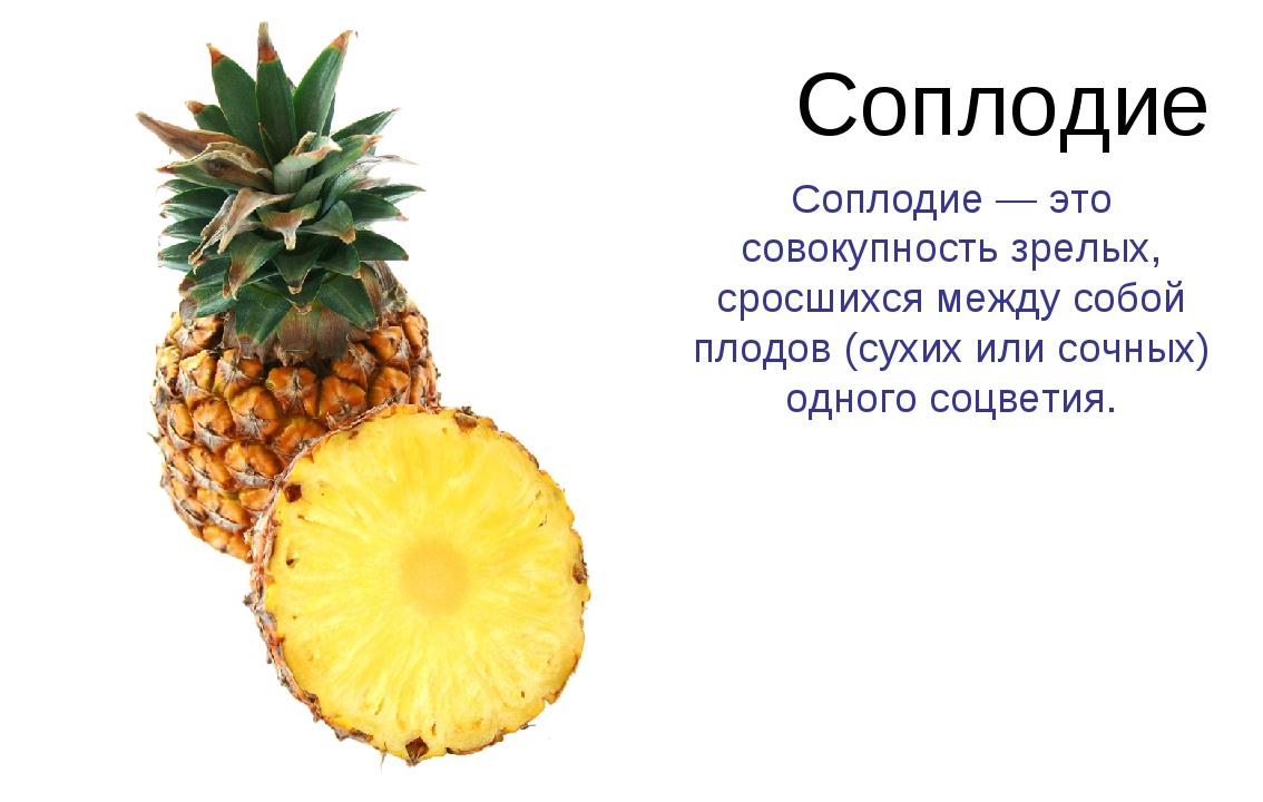 Соплодие Соплодие — это совокупность зрелых, сросшихся между собой плодов (су...