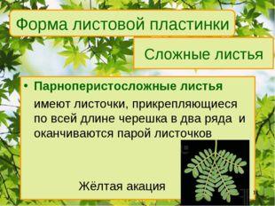 Сложные листья Парноперистосложные листья имеют листочки, прикрепляющиеся по