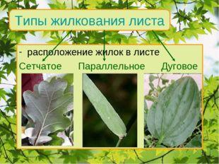 Типы жилкования листа расположение жилок в листе Сетчатое Параллельное Дугово