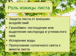 Роль кожицы листа Защита листа от внешних воздействий Газообмен: поглощение и