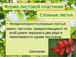Сложные листья Непарноперистосложные листья имеют листочки, прикрепляющиеся п