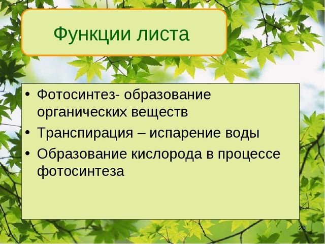 Функции листа Фотосинтез- образование органических веществ Транспирация – исп...