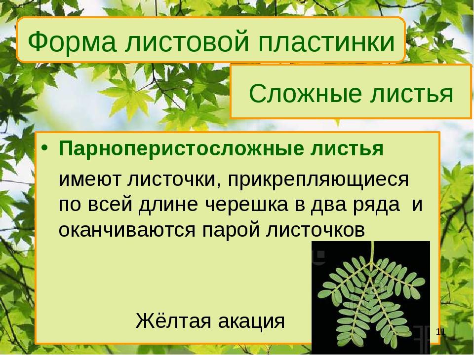Сложные листья Парноперистосложные листья имеют листочки, прикрепляющиеся по...
