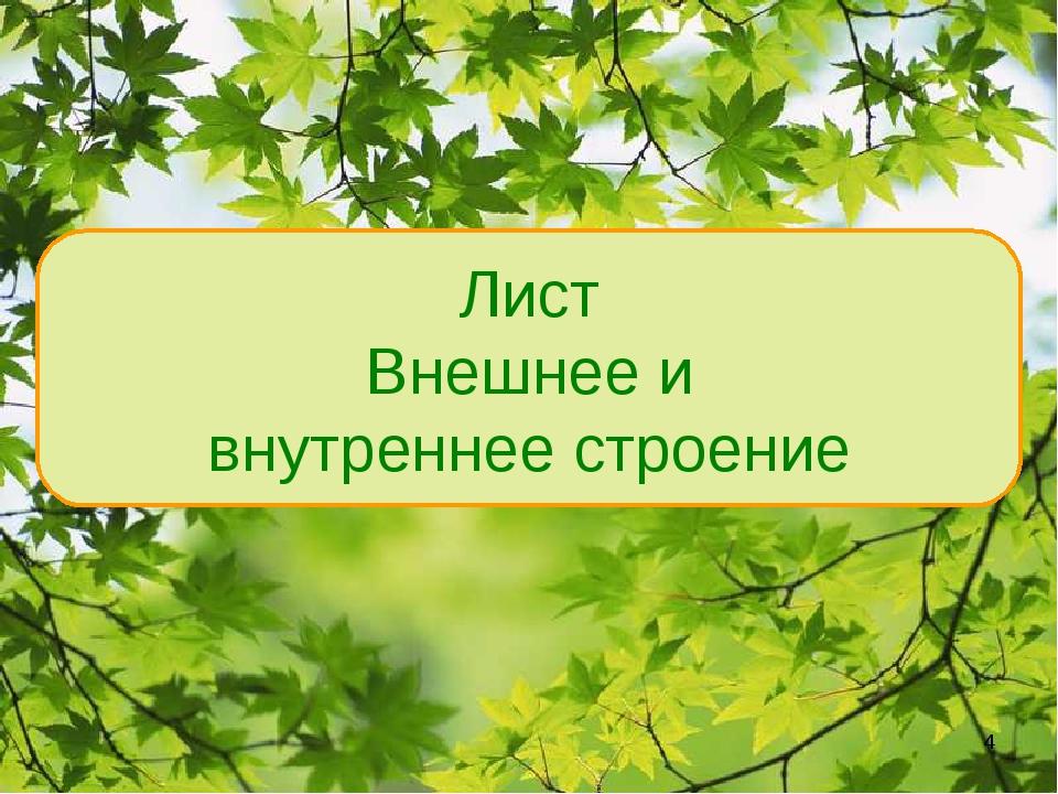 Лист Внешнее и внутреннее строение *